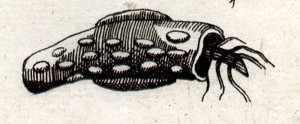 johnston2-1657-w