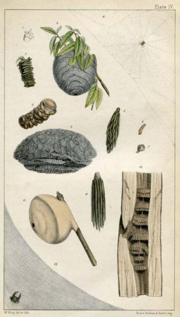 smee-pere-1850-1