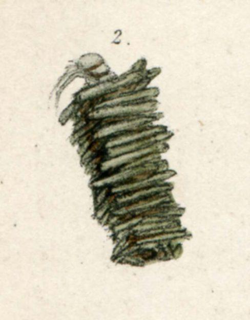 smee-pere-1850-2