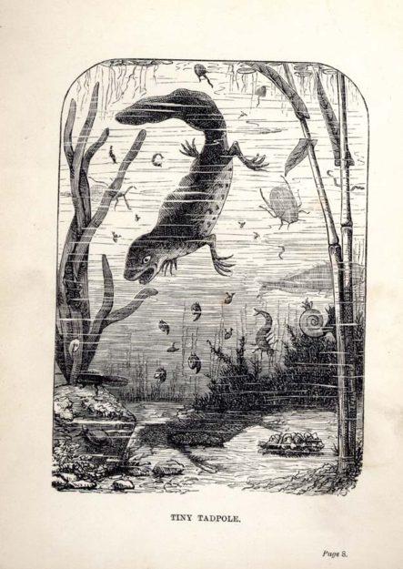 broderip-1862