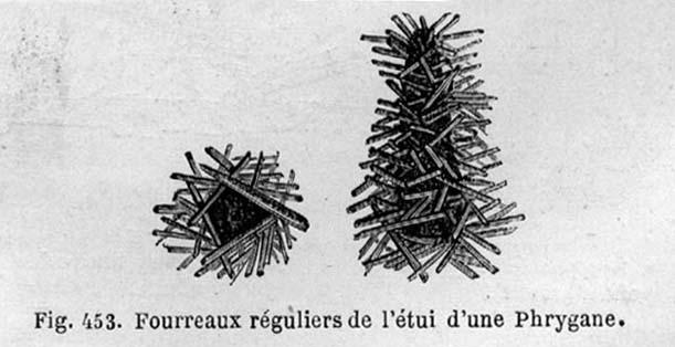 figuier-1867