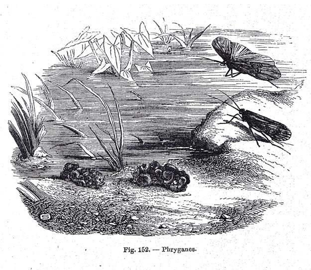pizzetta-1872-2