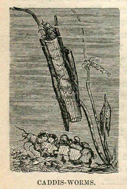 roberts-1880