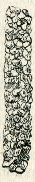 talmagne-1891-3
