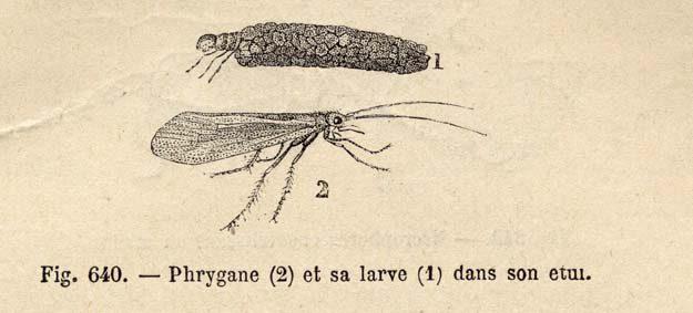 brongniart-1892