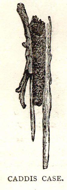 cooke-1892-4