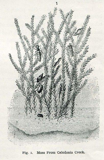 cheney-1896-1