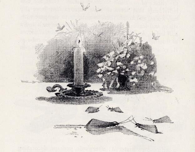 gibson-1898-1