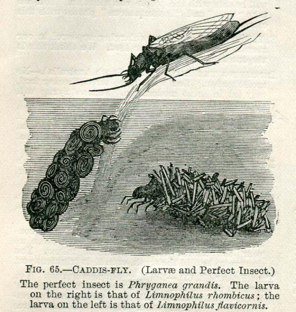 bennett-1899