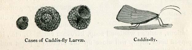 silcox-stevenson-1902-2