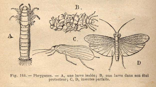 daguillon-1905