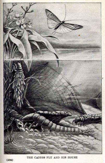 bralliar-1921