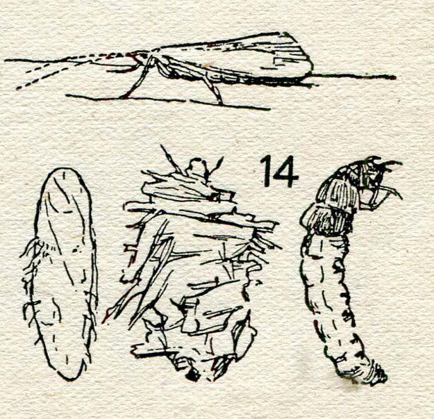 palmer-1920
