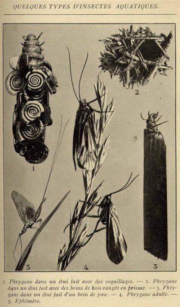 caustier-1921