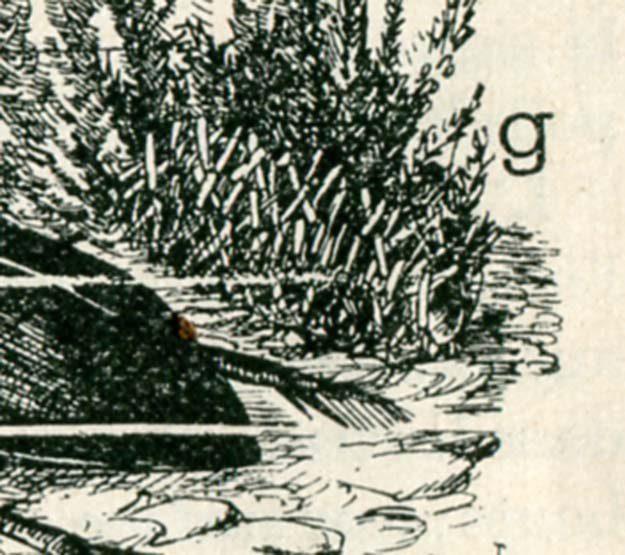 anonyme-animaux-plantes-1926-2