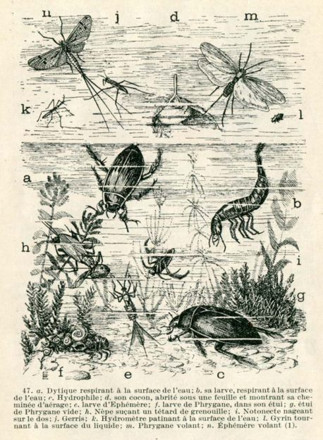 anonyme-animaux-plantes-1926-3