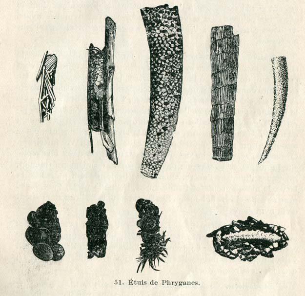 anonyme-animaux-plantes-1926-4
