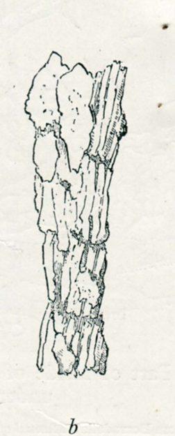 mackinnon-1936