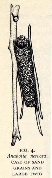Hickin 1952-4