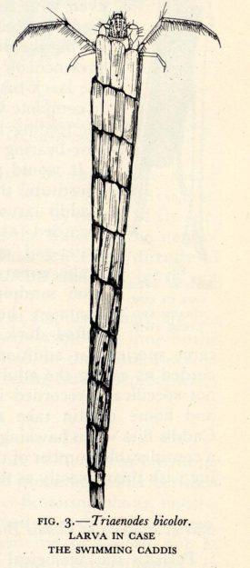 Hickin 1952-5