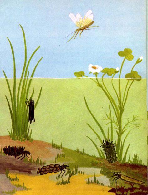 knap-1962-2