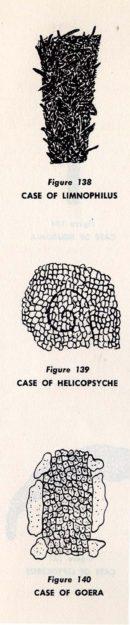 headstrom-1964-1