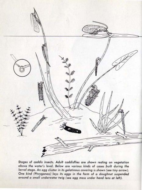 hutchins-1966-1