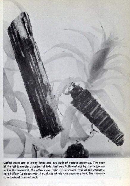 hutchins-1966-9