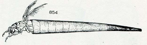 hickin-1967-13