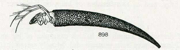 hickin-1967-18