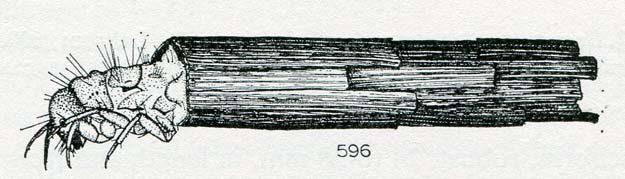 hickin-1967-19