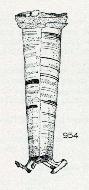 hickin-1967-25