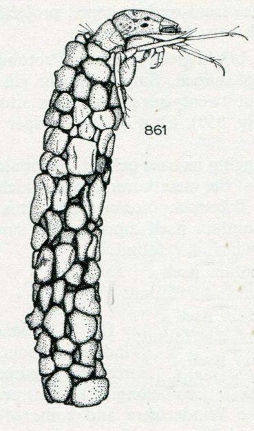 hickin-1967-36