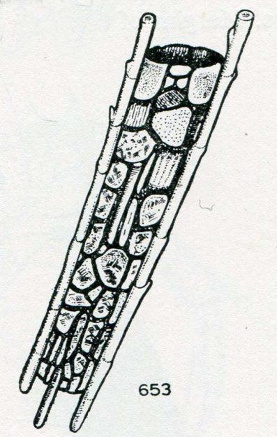 hickin-1967-38