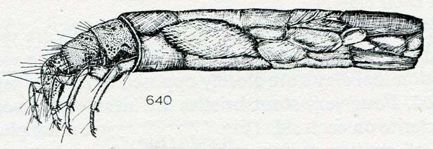 hickin-1967-39