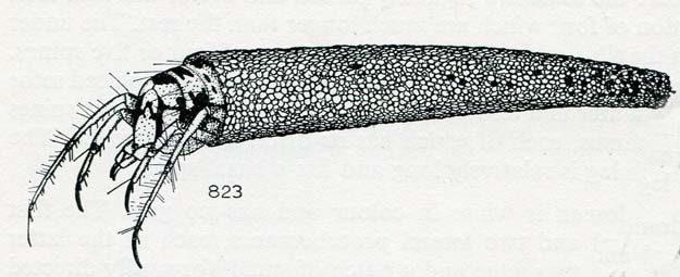 hickin-1967-44