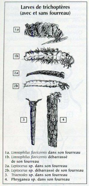 teton-1999