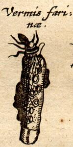 5johnston1-1657-w