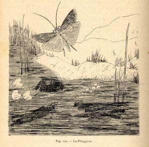 acloque-1898-w