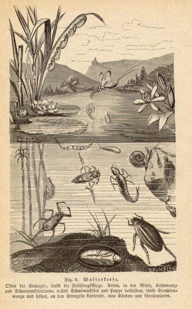 Graber 1877-79
