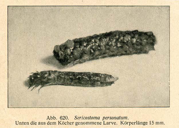bade-1920-4