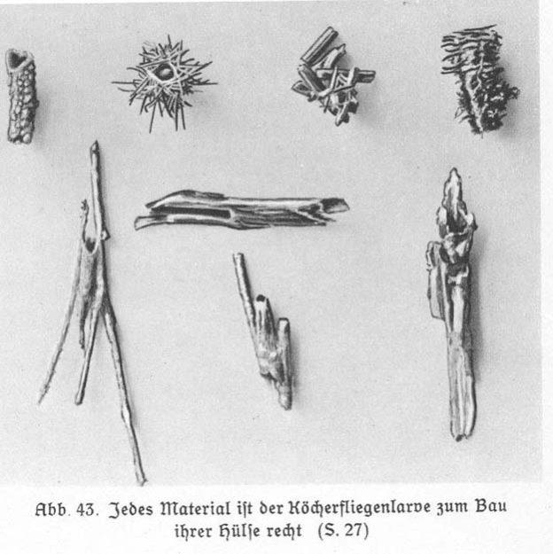 baensch-1930