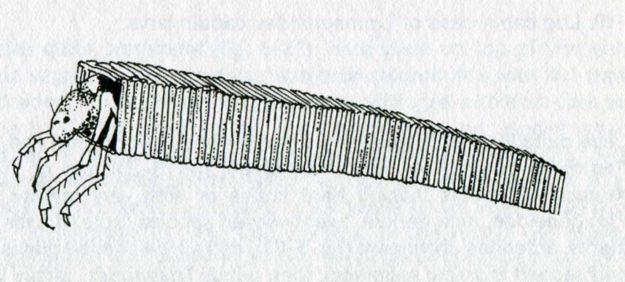 borger-1980-4