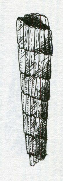 borger-1980-8