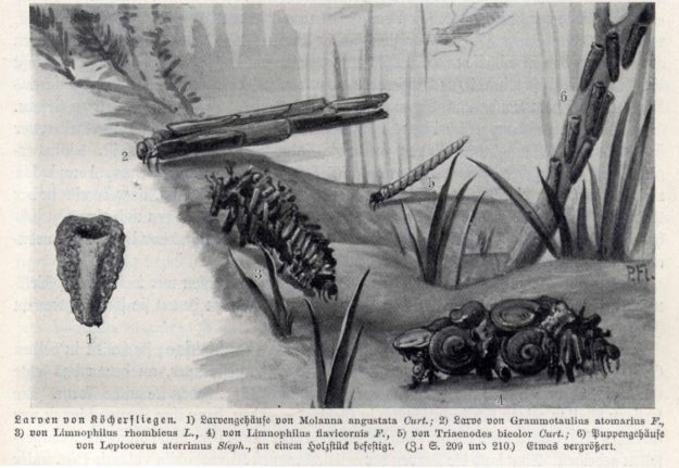 brehm-1915-1
