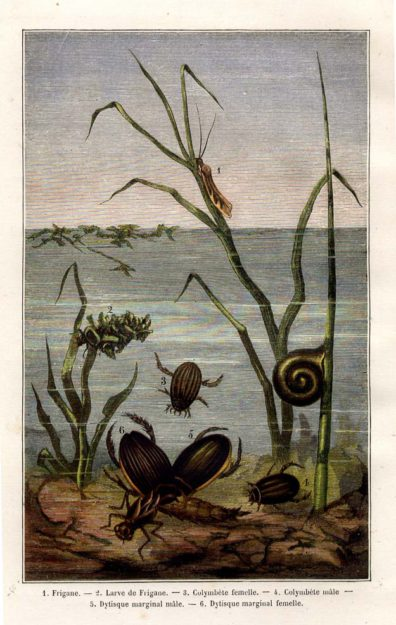bruyssel-1865