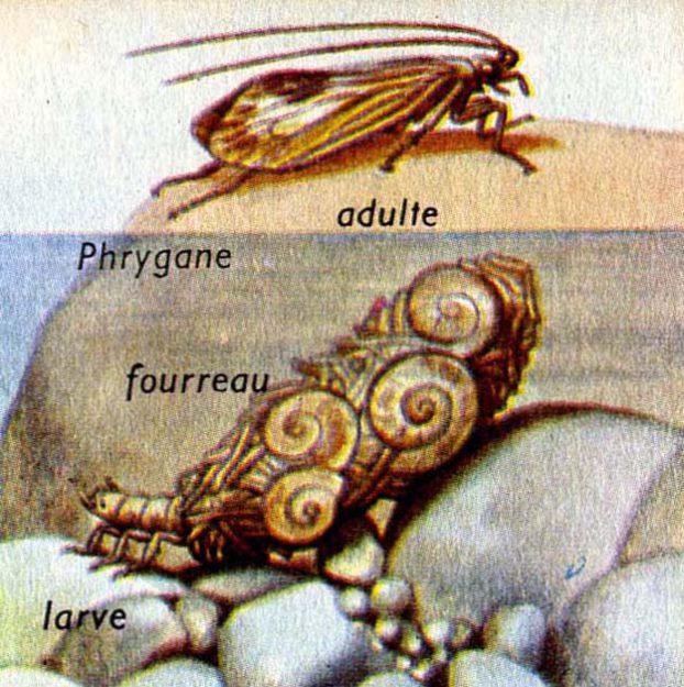 burnett-1958-zoologie