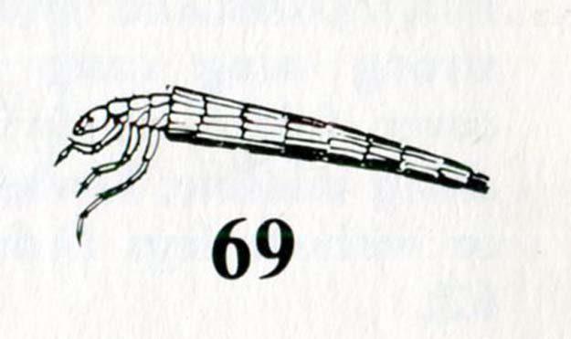 dahms-monteith-1979