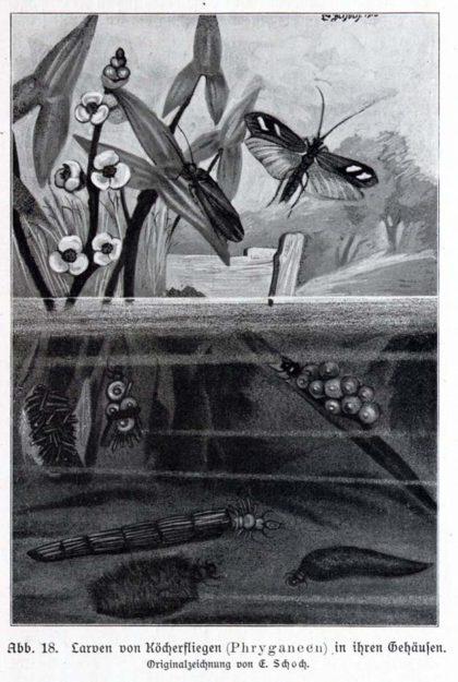 deegener-1910