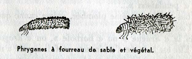 foch-1961-2